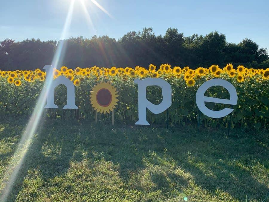 Sunflower field Ohio Maria's Field of Hope