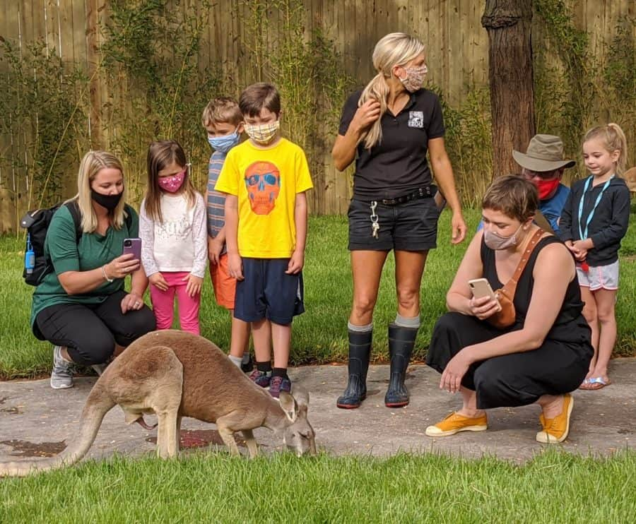 Kangaroo Walk-About at The Cincinnati Zoo