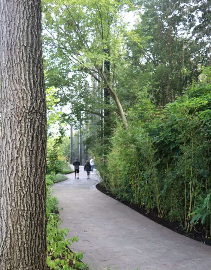 Tree lined path at the zoo