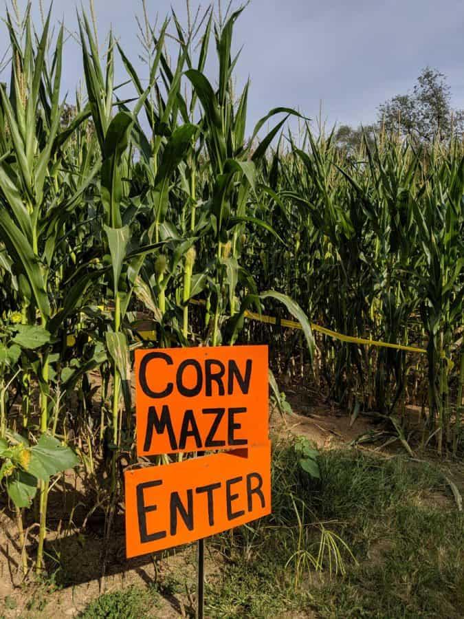 The corn maze at Burwinkel Farms