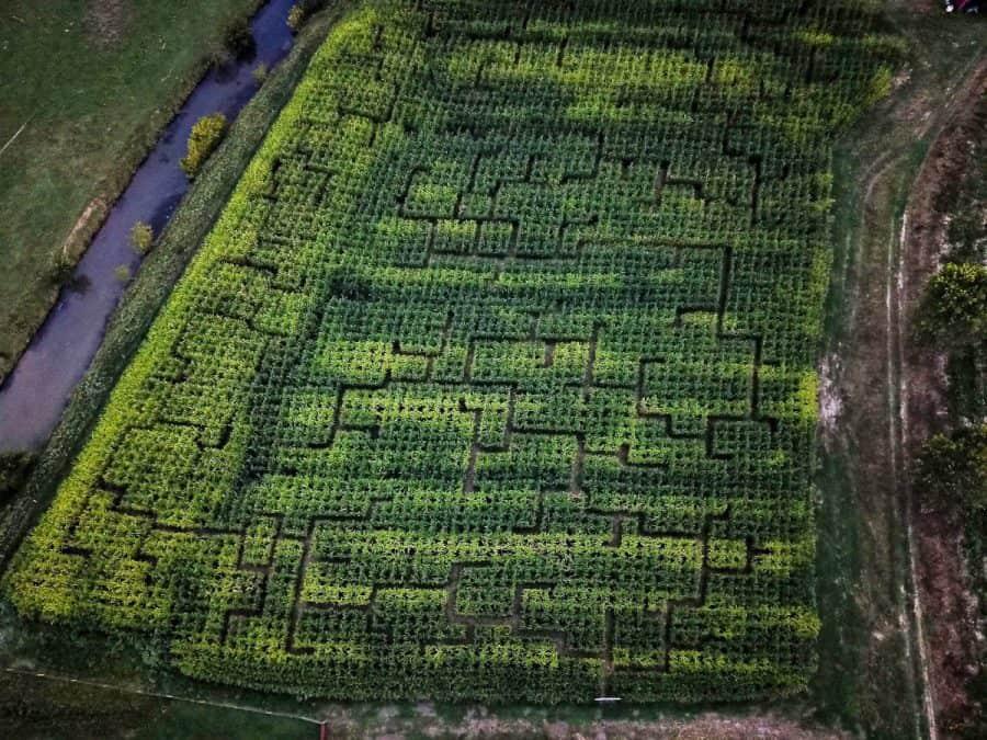 the 2020 corn maze for Neltners Farm