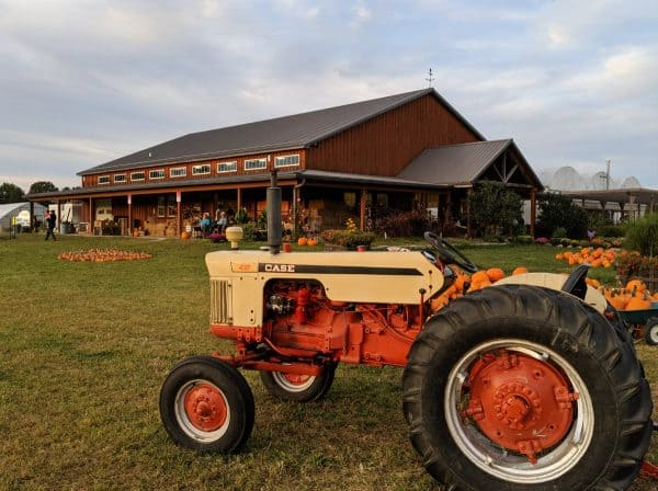Fall on the Farm at Blooms and Berries Farm Market