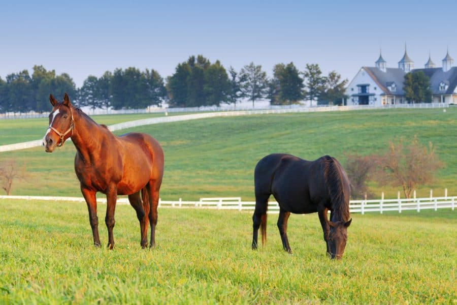 horses on a farm in Lexington, Kentucky